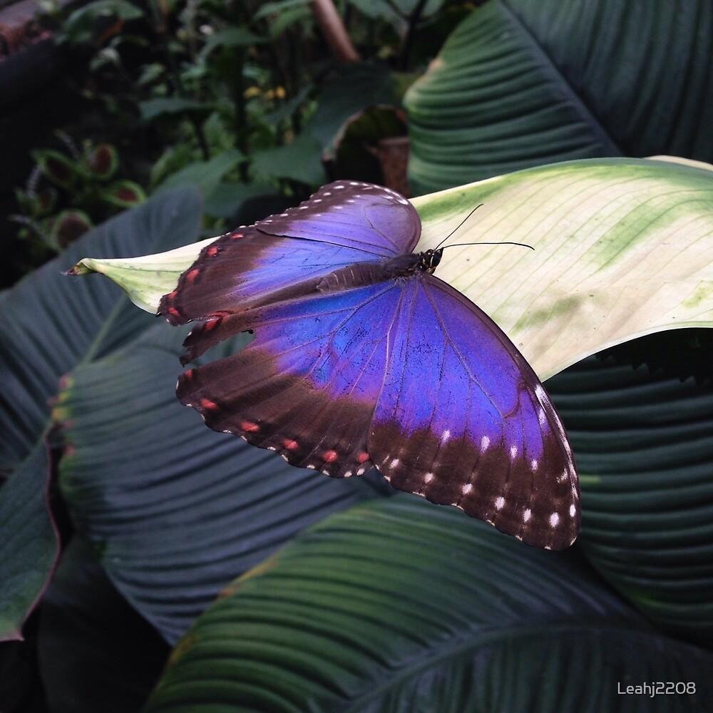 Beautiful butterfly  by Leahj2208