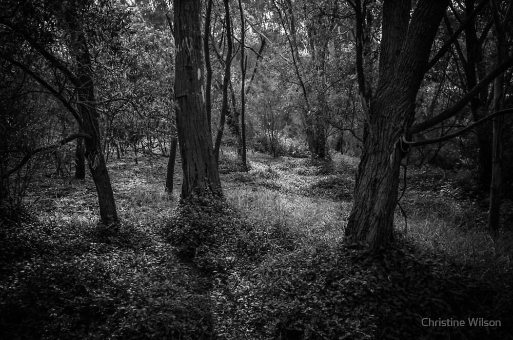 A Walk in the Woods by Christine Wilson
