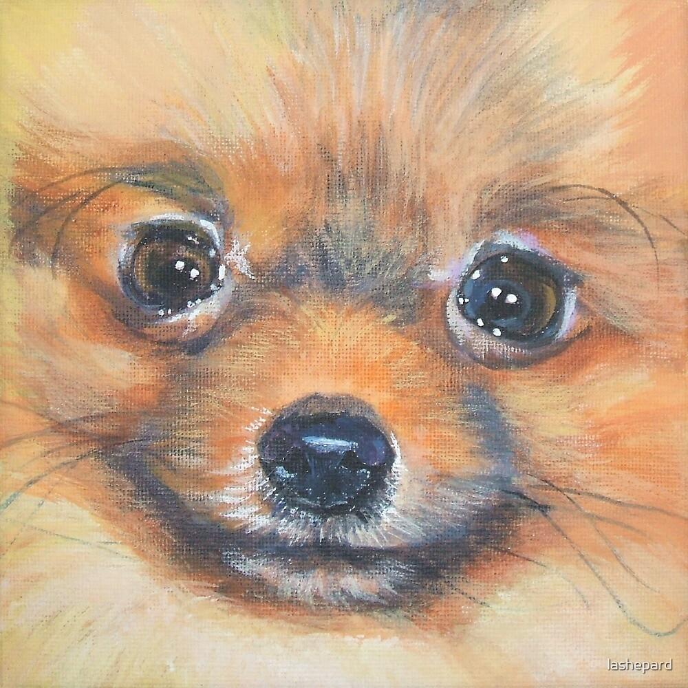 Pomeranian Fine Art Painting by lashepard