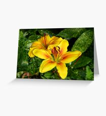 Bright Yellow Lilies Greeting Card
