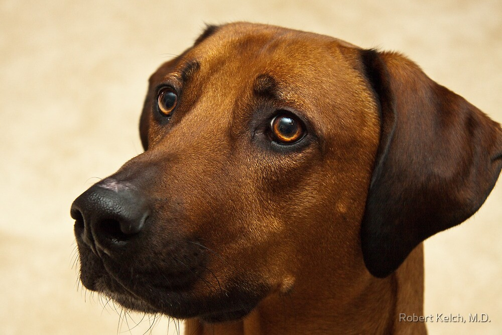 Mackinac - the Rhodesian Ridgeback by Robert Kelch, M.D.