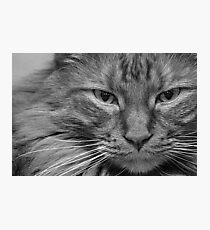 Legolas Photographic Print