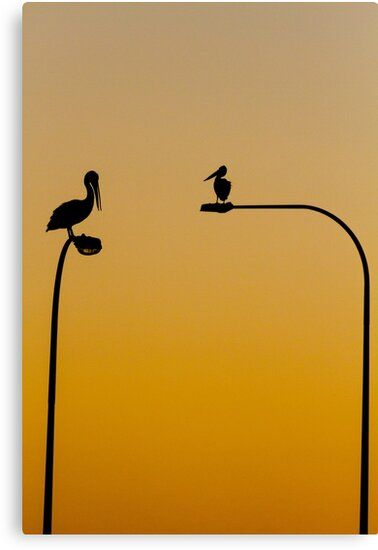 Pelicans by Whitepointer
