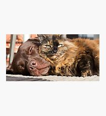 Cats & Dogs Photographic Print