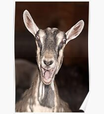 """I'm Baaaad"" - goat has goofy expression Poster"