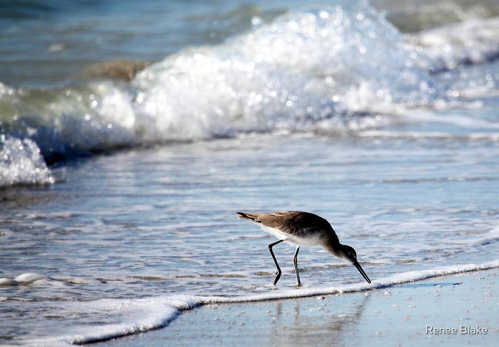 The Sandpiper's World by Renee Blake