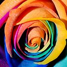 Rainbow Rose by claraneva