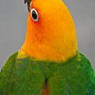A Pretty Bird by Heather Friedman