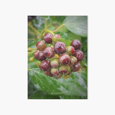 ivy fruits  Art Board Print