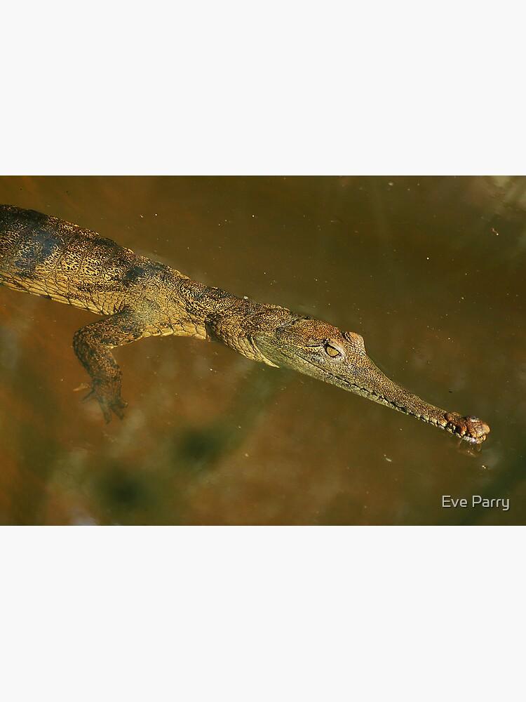 Fresh Water Crocodile by AdamsWife