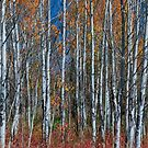 Red Orange Blue Stick Forest Portrait by Bo Insogna