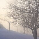 Sunrise on a Foggy Day by elisab
