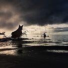 7:30 AM Kahala Time. by Alex Preiss