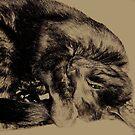 The Mysterious Feline by iamelmana