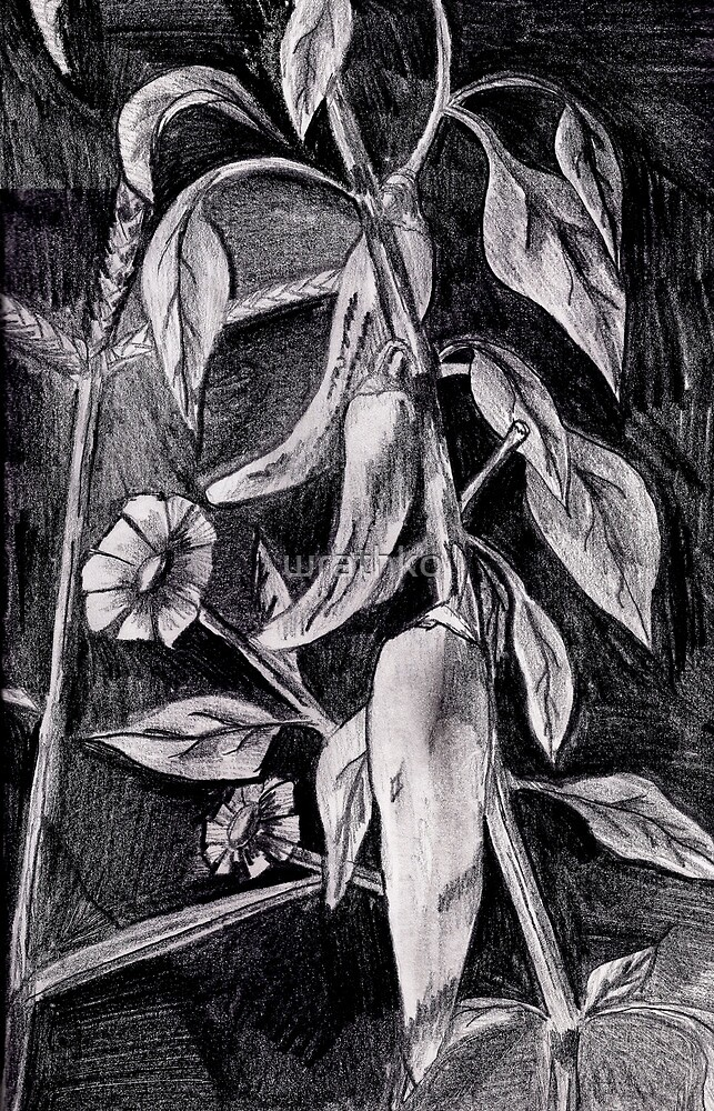 Three Hot Peppers on the Vine by wrathko