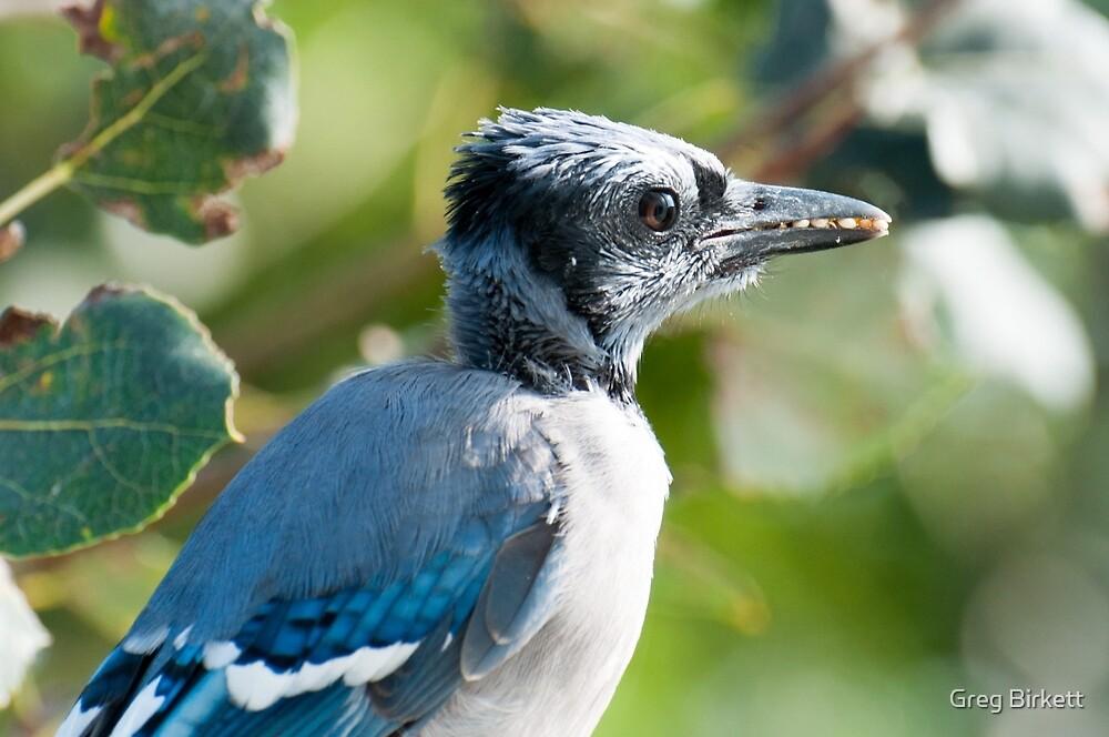 A Beak Full by Greg Birkett