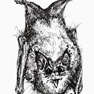 Bat by Anthropolog