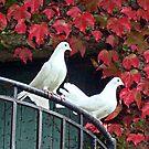 Peace ! by Irene  Burdell