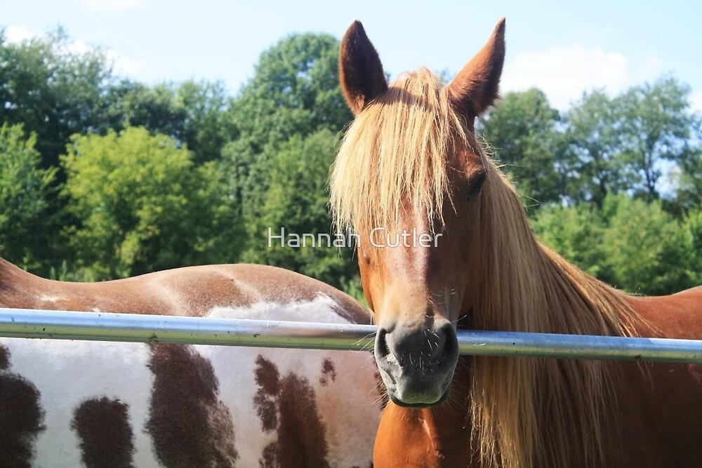 Mustang Sally by Hannah Cutler