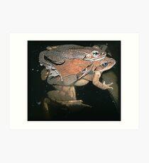 Amplexus/ Wood Frogs Art Print