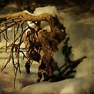 Uprooted #02 by Aaron Campbell
