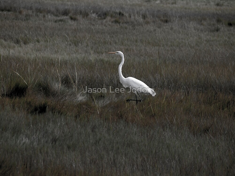 Crane by Jason Lee Jodoin