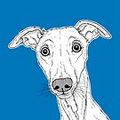 Whippet Dog Portrait ( blue background ) by Adam Regester
