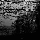 Grey Woods by malou