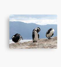 Three wise penguins Canvas Print