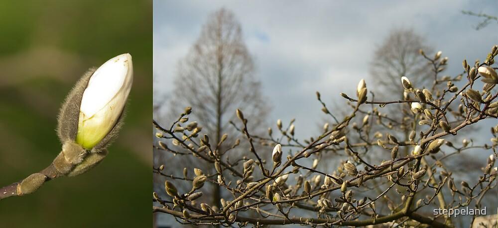 Budding Magnolia diptych by steppeland