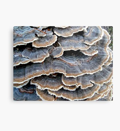 TURKEYTAILS 1 Metal Print