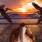 """Pelican Posse"" - brown pelicans at sunset by ArtThatSmiles"