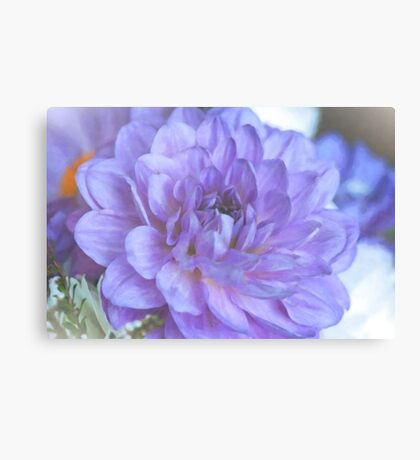 Purple Dahlia Canvas Print
