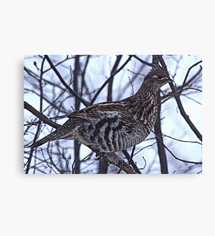 And A Partridge in a Elm Tree Canvas Print