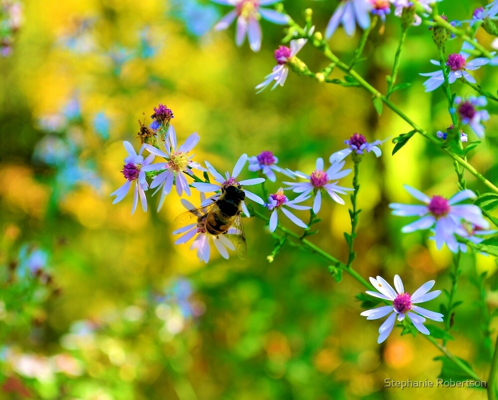 Pollinating by Stephanie Robertson