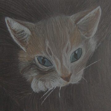 Coloured Graphite Cat by Wombie