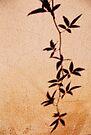 leaves of a wallflower by Georgie Hart