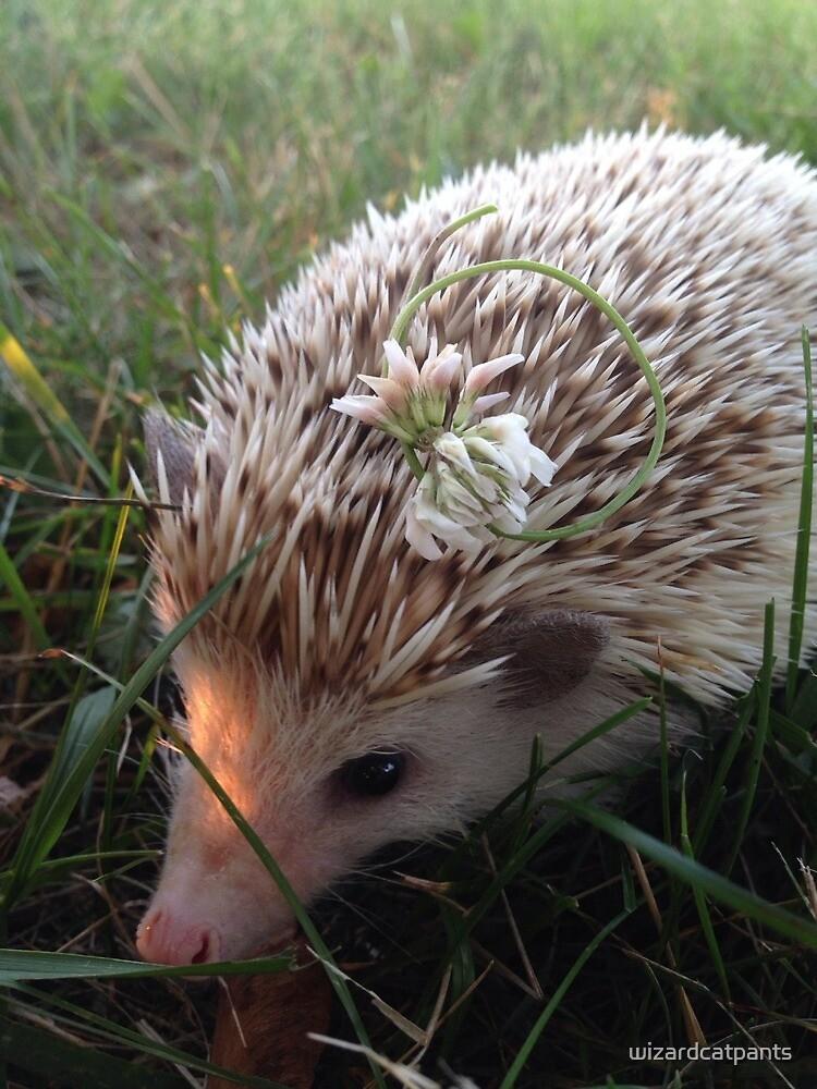 Hedgehog Flower Crown by wizardcatpants