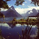 Milford Sound in Fiordland National Park by Alex Cassels