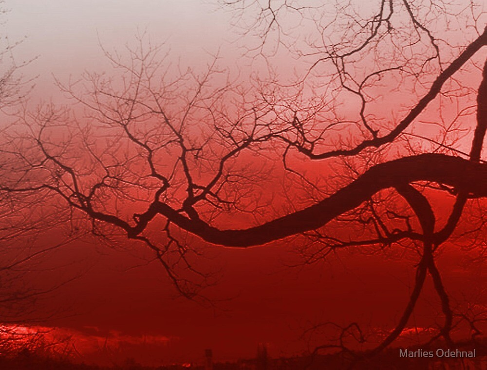 Summer tree in spain by Marlies Odehnal