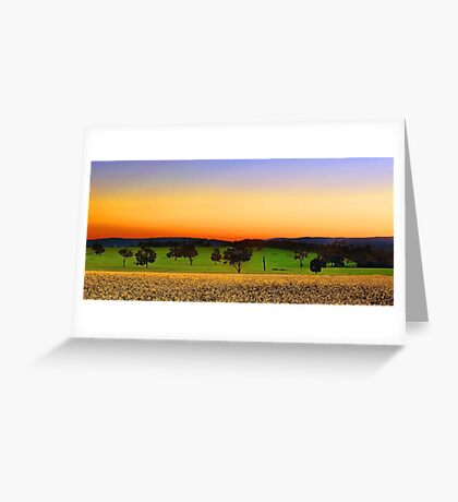 Canola Farm At Dawn Greeting Card