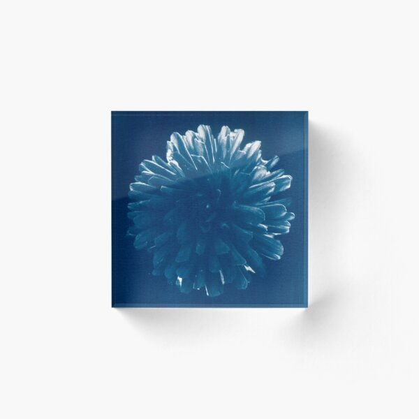Suspended Blue Chrysanthemum Cyanotype Print Acrylic Block
