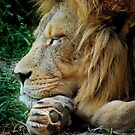 The Lion Sleeps by Michelle  Wrighton