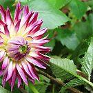 Bloom by Akash Puthraya