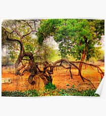 An Old Tree in National Zoo(Delhi) Poster