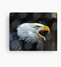Screaming Bald Eagle Canvas Print