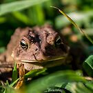 Toad In The Grass by Tom Gotzy