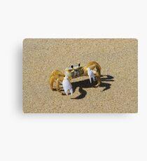 Sand Crab Canvas Print