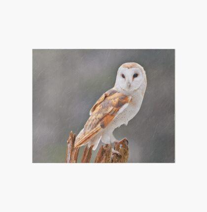 Barn Owl Art Board