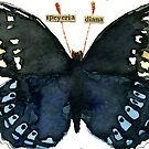 Speyeria Diana (Diana Fritillary Butterfly) by Carol Kroll